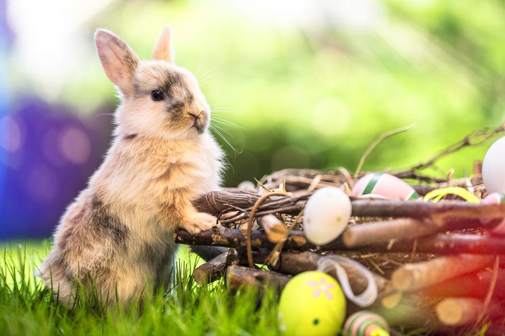 Neuigkeiten Frohe Ostern